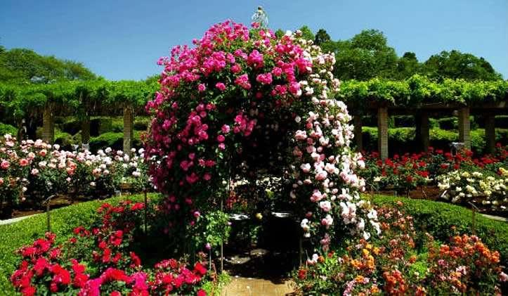 Декор из роз