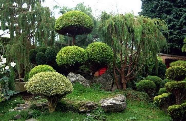 Большие деревья в ландшафтном дизайне
