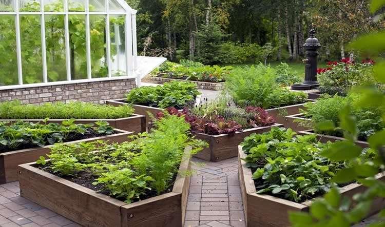 Дизайн огорода на даче