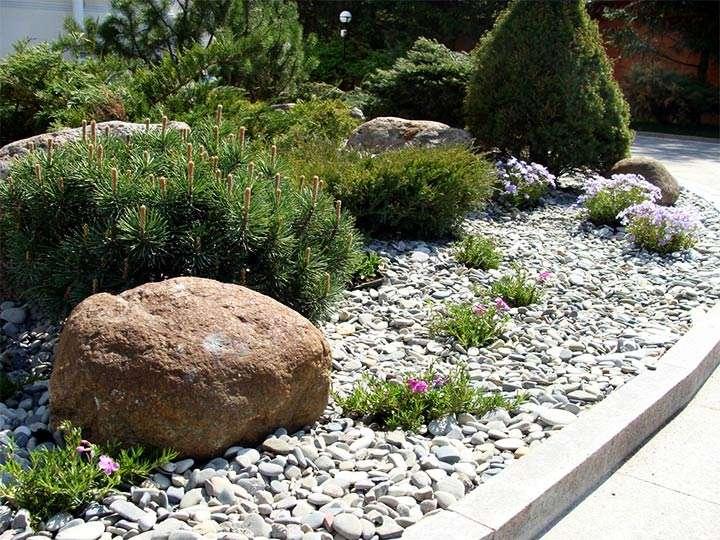 Хвойные и камни