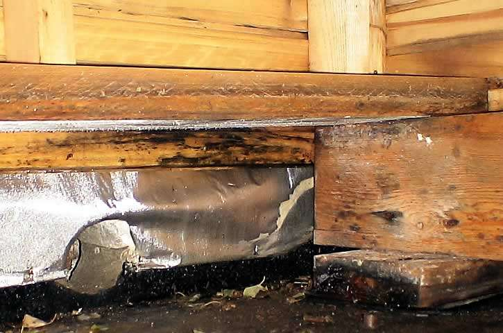 Начало процесса гниения древесины в бане