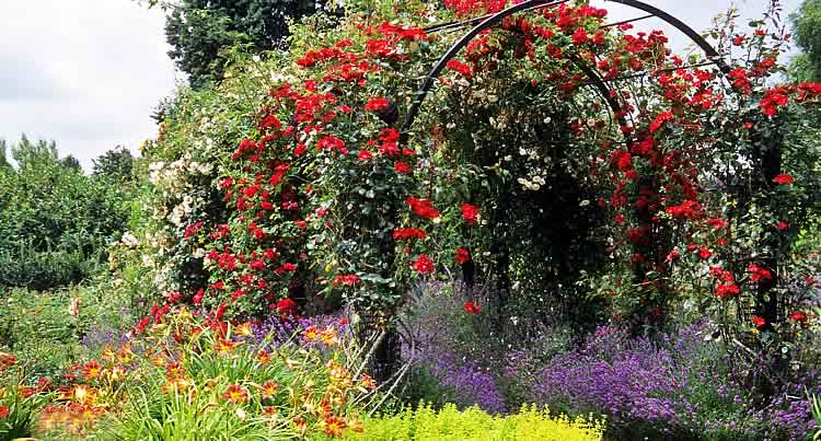 Металлическая пергола увитая розами