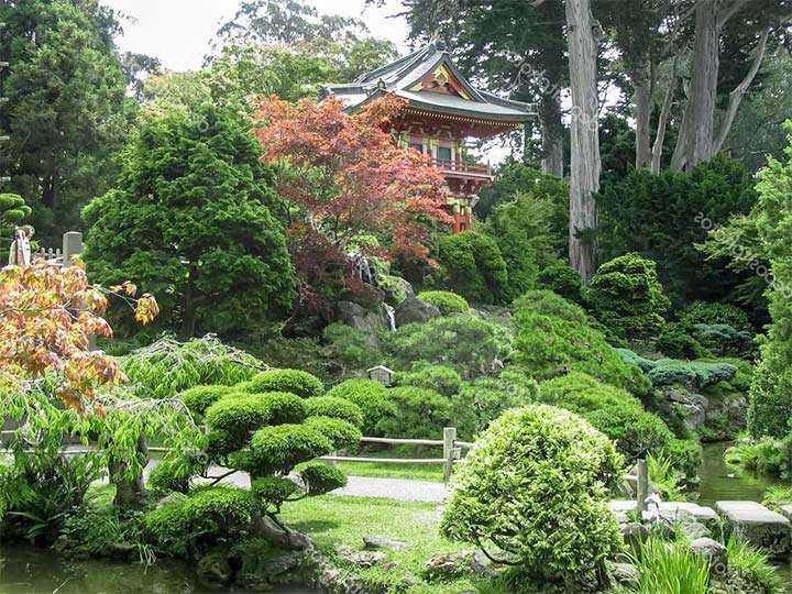 Чайный сад в Японии