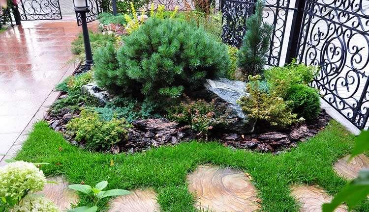 Применение хвойных растений в ландшафтном дизайне