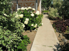 Бетонные дорожки в саду: особенности видов, технология укладки, уход