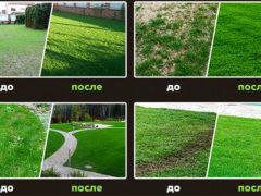 Жидкий газон: до и после