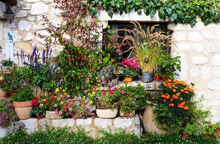 Цветы в горшках для украшения двора
