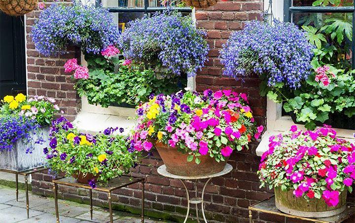 Декорирование однолетними цветами стены дома