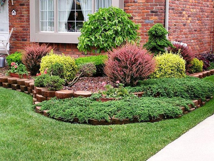 Садовая композиция из кустарников
