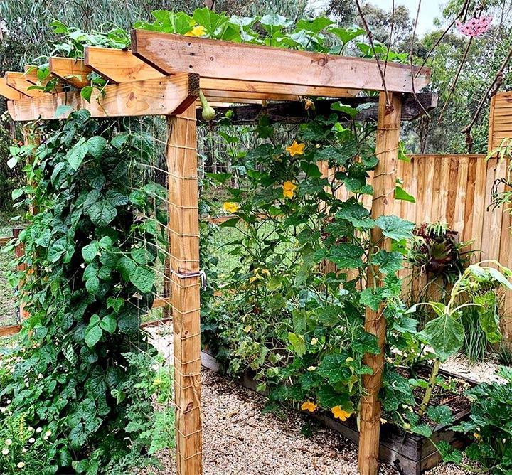 Конструкция для выращивания огурцов