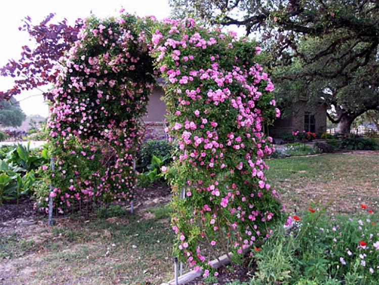 Арочная пергола с цветами
